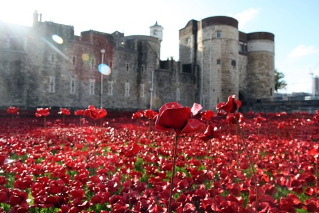 2 september - poppies in the morning